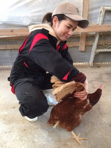 鶏捕まえる2